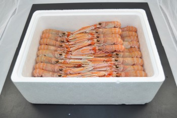 3kg Fresh Prawn Poly Box