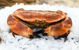 Crab close up