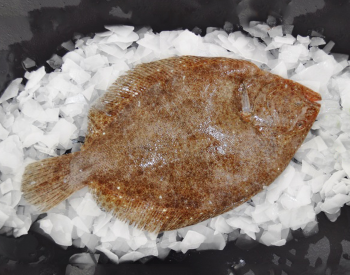 Fresh Whole Brill