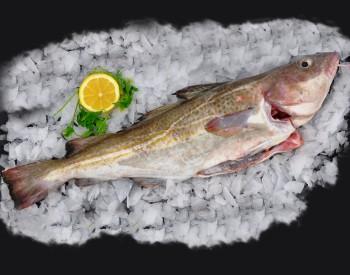 Fresh Cod Whole