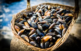 mussels-1-2
