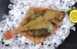 Fresh Whole Plaice