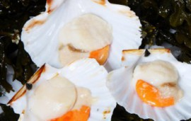 Irish King Scallops