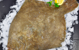 Fresh Whole Turbot